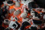 Ashfield BBQ (에쉬필드 바베큐)